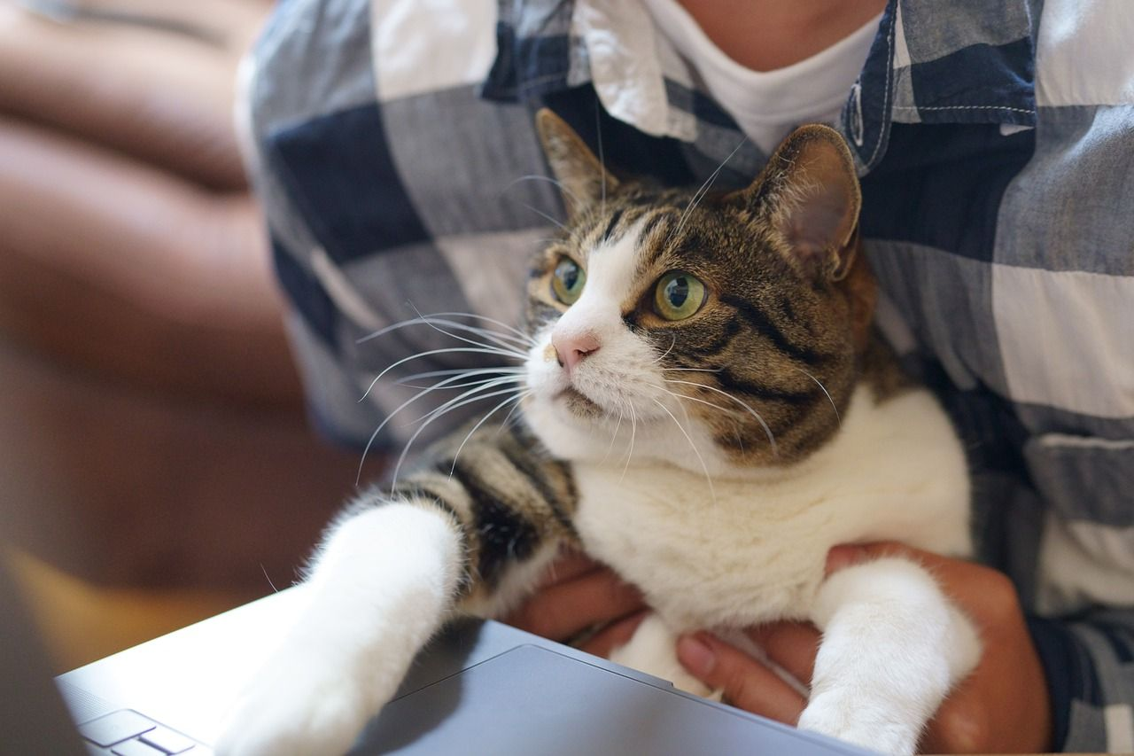 How to build a strong culture in a remote team includes getting to know each others' pets.